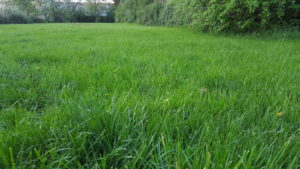 Große Rasenfläche