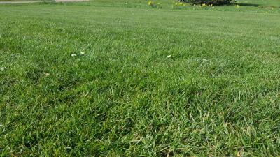 Rasen zum Kalken vorbereiten