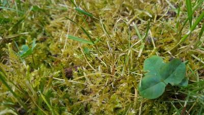 Rasen kalken hilft gegen Moos