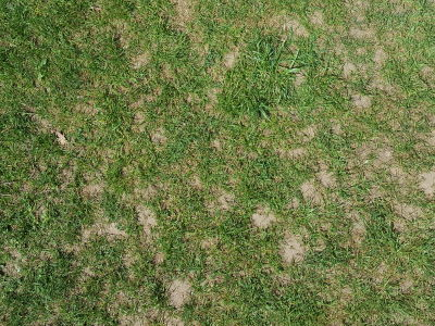 Rasen mit zu viel Kalk
