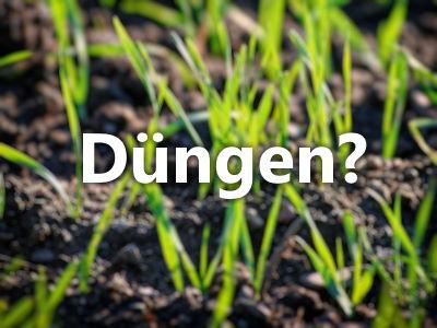 Frisch gesäten Rasen düngen