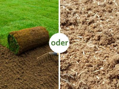 Rasen säen oder Rollrasen