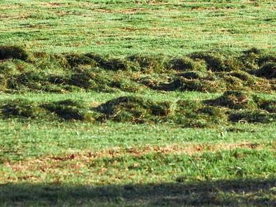 übriger Rasenschnitt auf Wiese