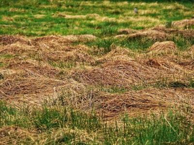 liegengelassener Rasenschnitt