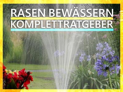 Rasen bewässern Komplettratgeber