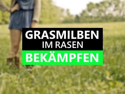 Grasmilben im Rasen bekämpfen