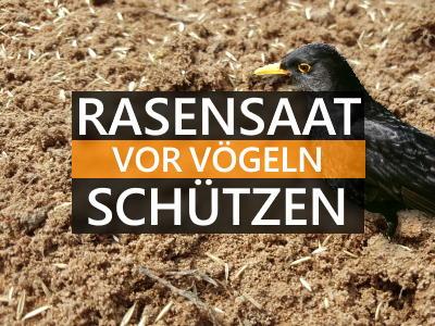 Rasensaat vor Vögeln schützen